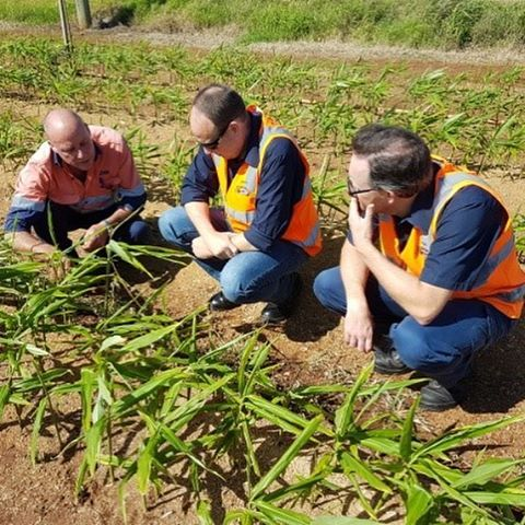 🌱 #flashback to the end of last year when the team from Bundaberg Brewed Drinks visited us on farm to see where and how ginger is grown. #ginger #farming #bundabergbreweddrinks #carterandspencer