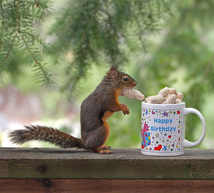 Happy Birthday, You Nut! | Flickr - Photo Sharing!