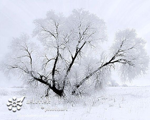 Magic Tree 8 X 10 photograph fine art by AsteriskPhotoart on Etsy, $30.00