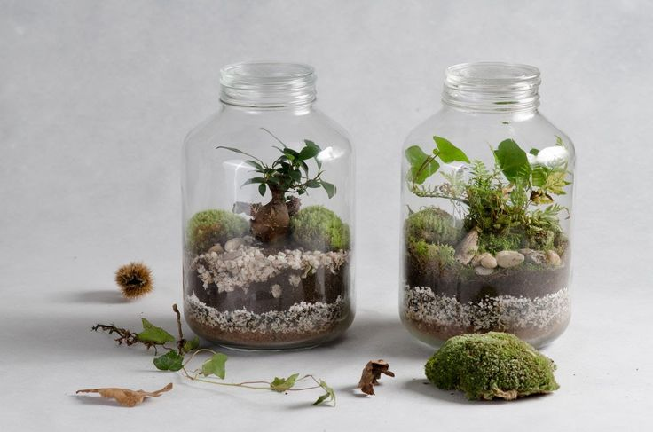 17 meilleures id es propos de terrarium de mousse sur pinterest jardin de mousse peinture. Black Bedroom Furniture Sets. Home Design Ideas
