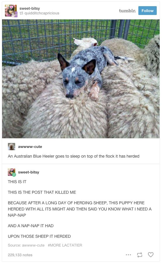 This perfect spot for a nap.   29 Times Tumblr Just Couldn't Take Australian Animals Seriously