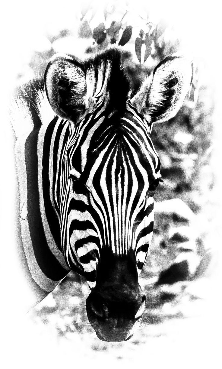 Strips by Vladlen Tsiskarishvili on 500px