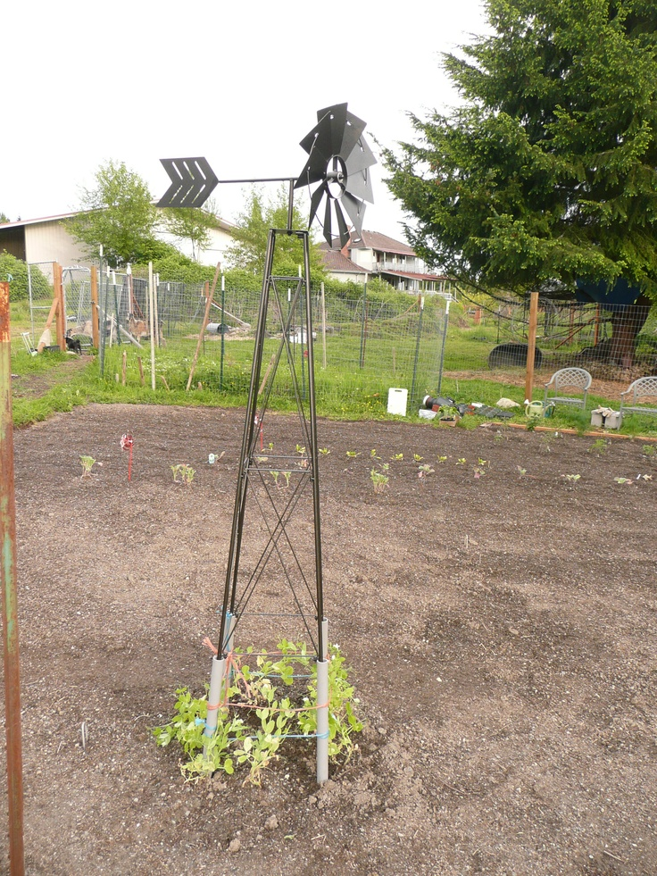 Wind mill in the garden. I planted some peas around it. May 2012