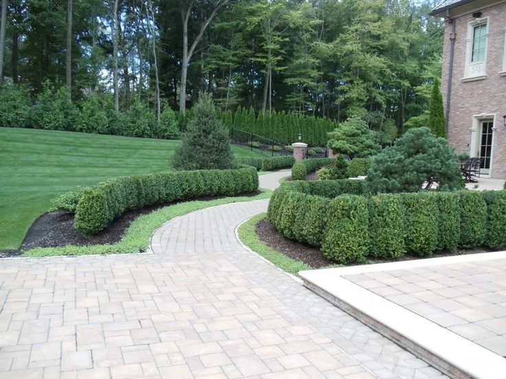 25 Best Ideas about American Boxwood on Pinterest