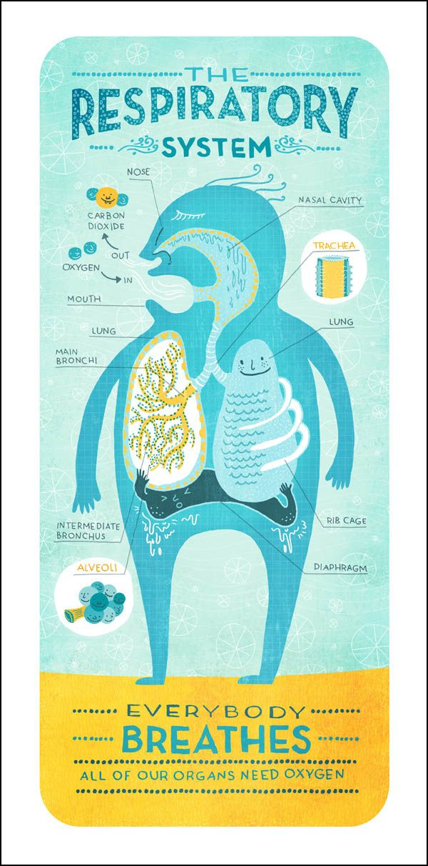 Cool Respiratory System Anatomy Infographics - by Rachel Ignotofsky