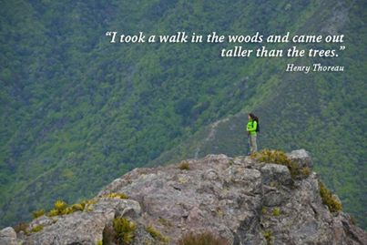 I took a walk in the woods and came out taller than the trees. ~ Henry David Thoreau #travel #quotes #hiking