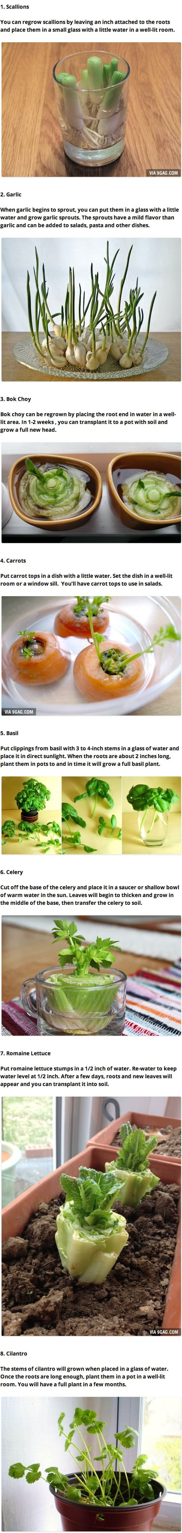 8 Vegetables That You Can Regrow Again And Again/8 vegetales que puedes plantar en casa una y otra vez