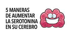 La serotonina actúa como un neurotransmisor, un tipo de sustancia química que ayuda a transmitir señales de un área del cerebro a otra... se cree que influye en una variedad de funciones psicológicas y otras funciones corporales. Esto incluye células relacionadas con el estado de ánimo, deseo y función sexual, apetito, sueño, memoria y aprendizaje, regulación de la temperatura y algún comportamiento. WebMD Aunque la serotonina es una sustancia química frecuentemente asociada con la…