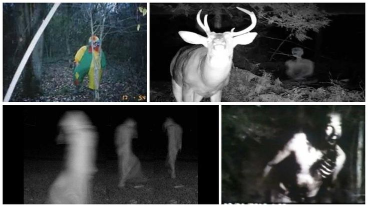 Trail cameras are used primarily by hunters and researchers to study animals and wildlife. The cameras are usually hidden from view so as not to disturb nature, and often times are able to capture things that don't want to be seen. This is especially terrifying because trail cams have the ability to capture things that would