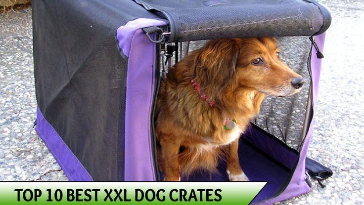 Best XXL Dog Crates
