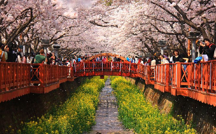 My Beautiful Korea W Korea Southkorea City Yeojwacheon Flowers Beautifulplaces