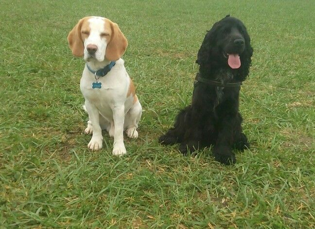 Fibo's best friend, Boldi
