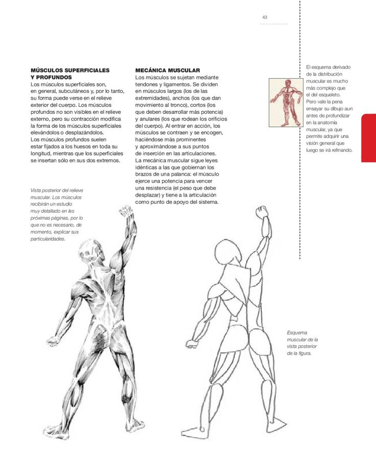 To practice human figure drawing, it is essential to understand anatomy as fully as possible, in everything involving the external muscular volume of the figure. This book provides exhaustive anatomical descriptions, suited to the requirements of artists who want to draw or paint