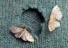7 solutions naturelles anti-mites textiles à adopter d'urgence
