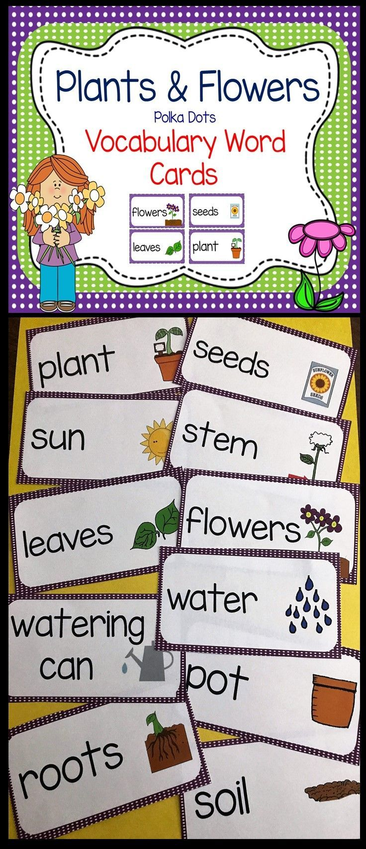 Plants And Flowers Polka Dots Vocabulary Word And Picture Cards Word Wall Science Focus Wall Pocket Vocabulary Cards Plant Vocabulary Cards Vocabulary [ 1704 x 736 Pixel ]