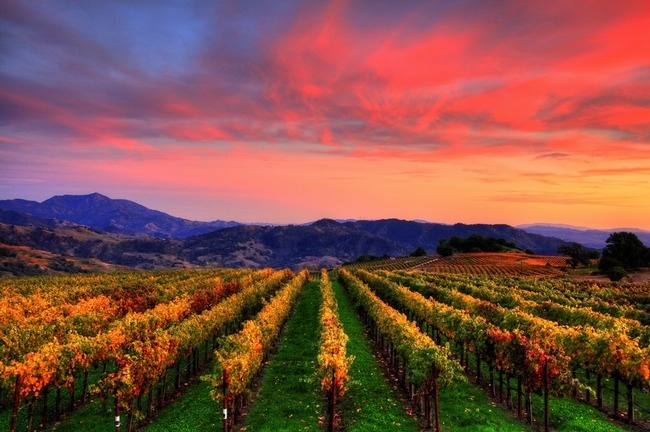 Sonoma County Fall In The Vineyards By Benjamin Stein