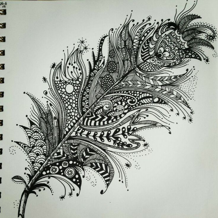Zentangle Feather Coloring Pinterest And