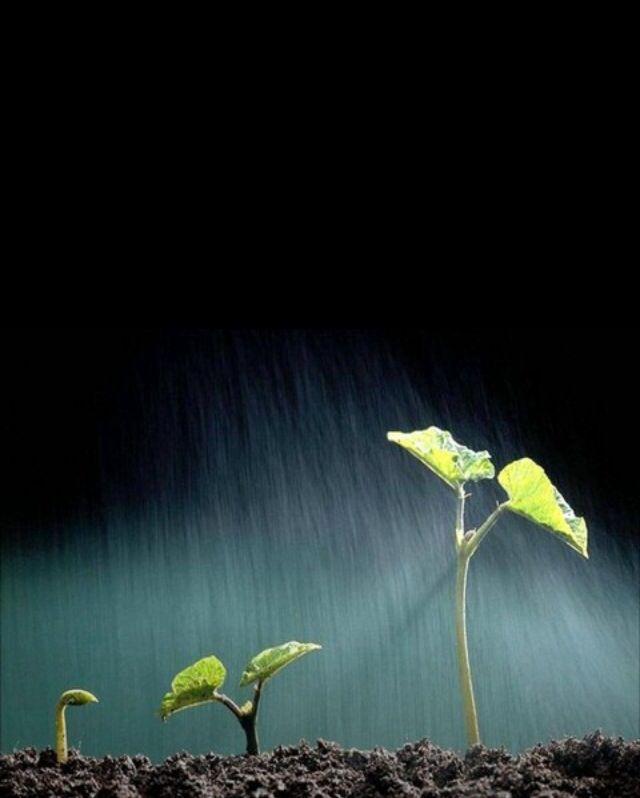 Que bueno es #respirar ese olor a tierra mojada después de la #lluvia