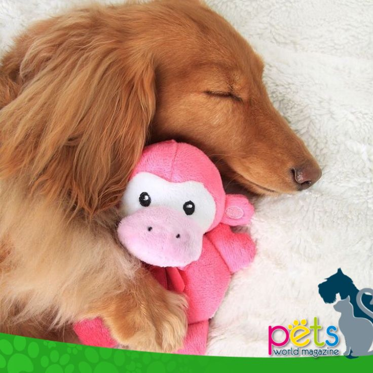 Buenas noches 🌝  #PetsWorldMagazine #RevistaDeMascotas #Panama #Mascotas #MascotasPanama #MascotasPty #PetsMagazine #MascotasAdorables #Perros #PerrosPty #PerrosPanama #Pets #PetsLovers #Dogs #DogLovers #DogOfTheDay #PicOfTheDay #Cute #SuperTiernos