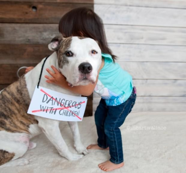 """Powerful Photos Break Down Every Ugly Pit Bull Rumor................With help from pet-focused photo-sharing app Dogly, pitty lovers shared photos of their dogs along with stereotypes about pit bulls that they want to """"strike-out."""""""
