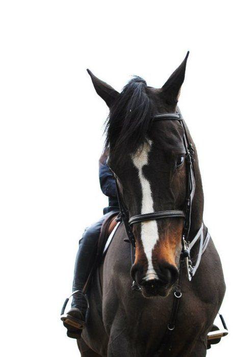English bridal and saddle on a horse that looks exactly like Bella <3