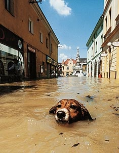 Floods in Prague 2002 | Prague | Czech Republic
