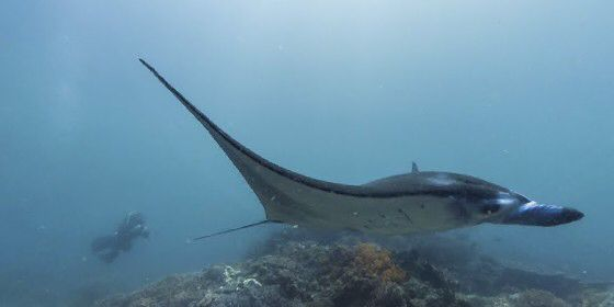 Check out Komodo Islands on #StreetView