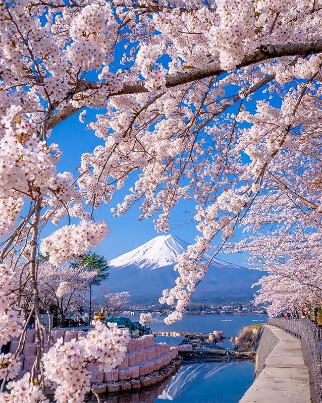 A Beautiful Spring Rhapsody Of Sakura And Nemophila Flowers In Fukuoka Prefecture Japanese Landscape Japan Tourist Japan Sakura