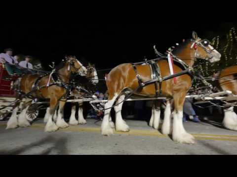 Exclusive look inside Anheuser-Busch's iconic horse breeding operation. Take a peek behind the scenes of the iconic Budweiser Clydesdale Superbowl commercial...