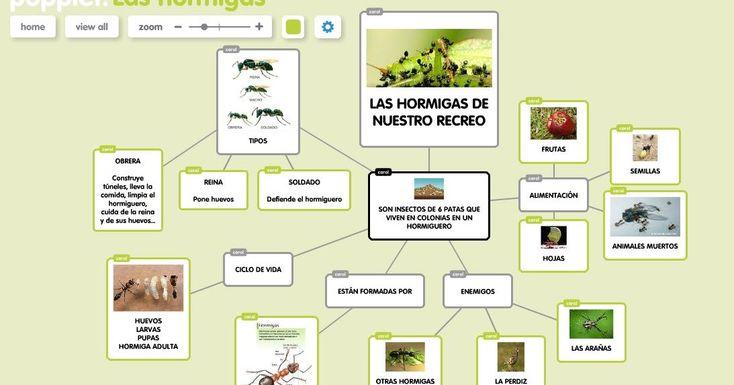 14 best hormigueros images on Pinterest | Hormigas, Formicidae y ...