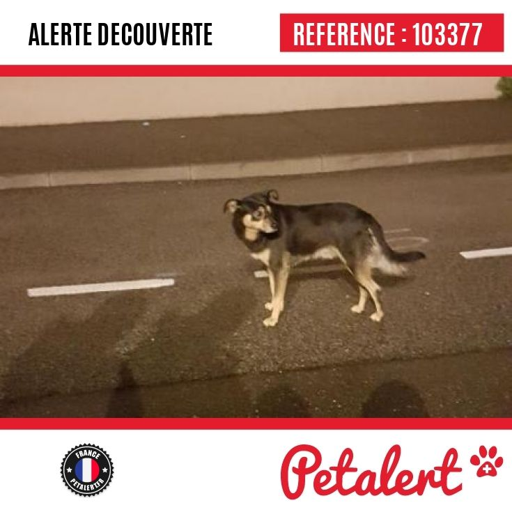 24.11.2016 / Chien / Décines-Charpieu / Rhône / France