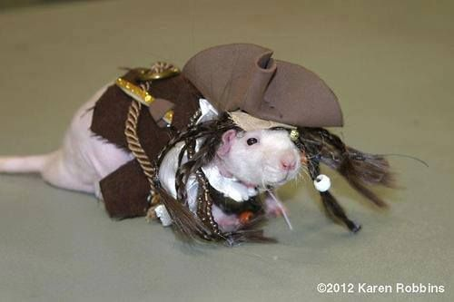 17 best images about pirate pet costumes on pinterest