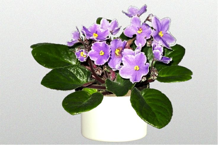 46 best non poisonous houseplants safe for kids and pets for Large non toxic house plants