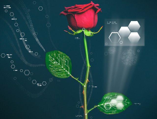 S-ar putea să apară trandafiri bionici