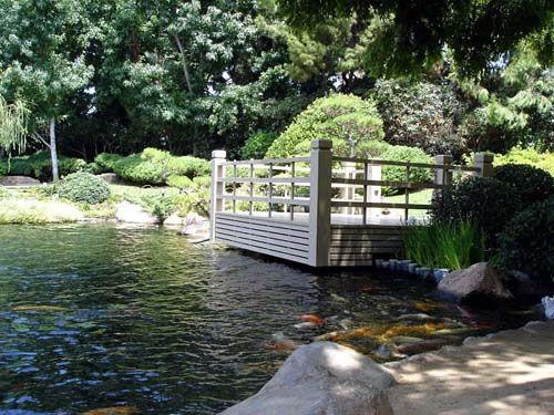 Csulb japanese garden long beach open m f 8 00am 3 for Koi fish pond csulb