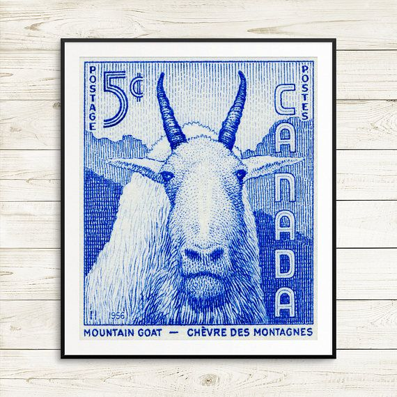 P051 Goat goats mountain goat mountain goat art moutain