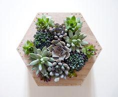 Rue Rivoirette: DIY ◊◊ Un cadre végétal