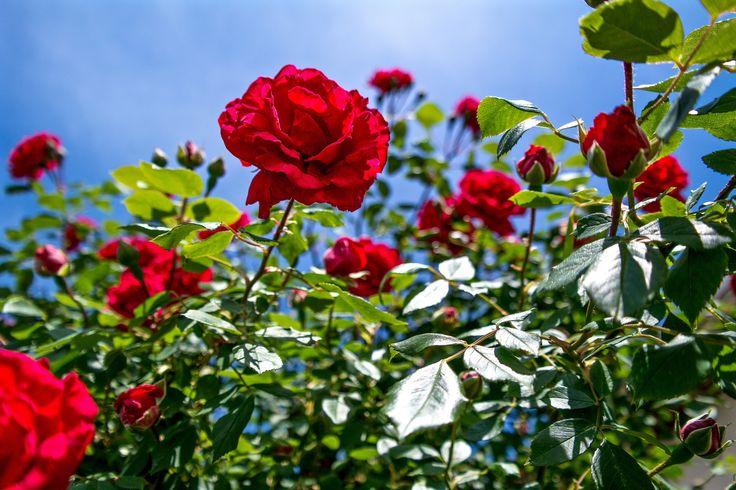 https://flic.kr/p/sxxAqm   Májusi virágok