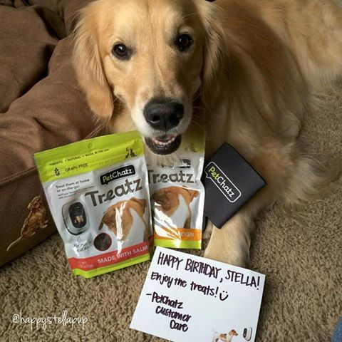 It S The Little Things That Make People And Pets Smile We Re So Glad That We Could Help Make Stella S Birthday A Little More Pet Watching Pet Cam Pet Camera