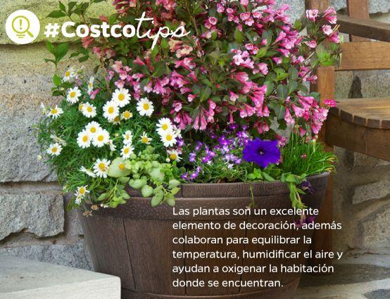 En Costco elegimos cuidadosamente las plantas que se venden en cada región, dependiendo de las condiciones geográficas y climatológicas.
