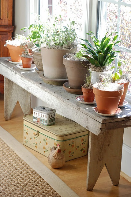 beautiful way to display plants