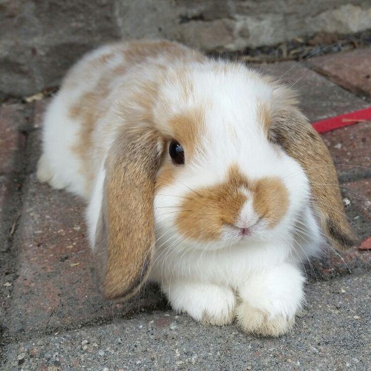 My baobao the bun ! She's a cutie ;)