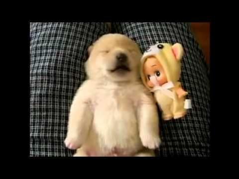 Sleeping Puppy Dreaming... Sugar  Bush Squirrel approved!
