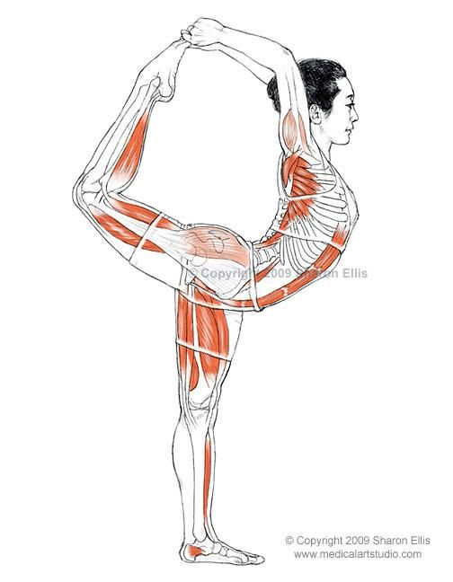 Natarajasana (Lord of the Dance Pose)    B e n e f i t s   — Stretches the shoulders and chest  — Stretches the thighs, groins, and abdomen  — Strengthens the legs and ankles  — Improves balance    ♥ Yoga Inspiration
