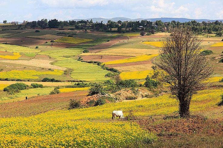 motoring across shan plateau to pindaya fields of sesame and mustard