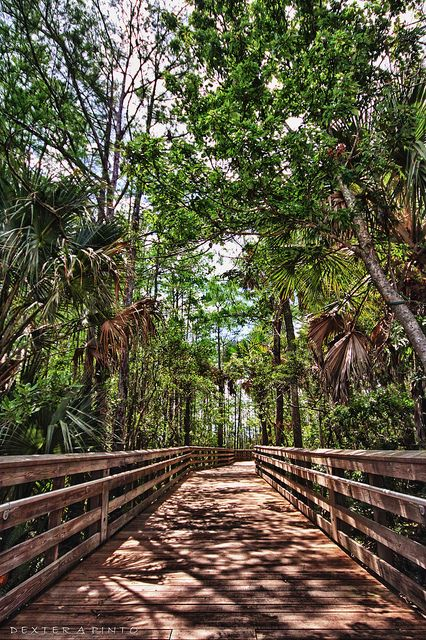 Grassy Waters Preserve (West Palm Beach, Florida)