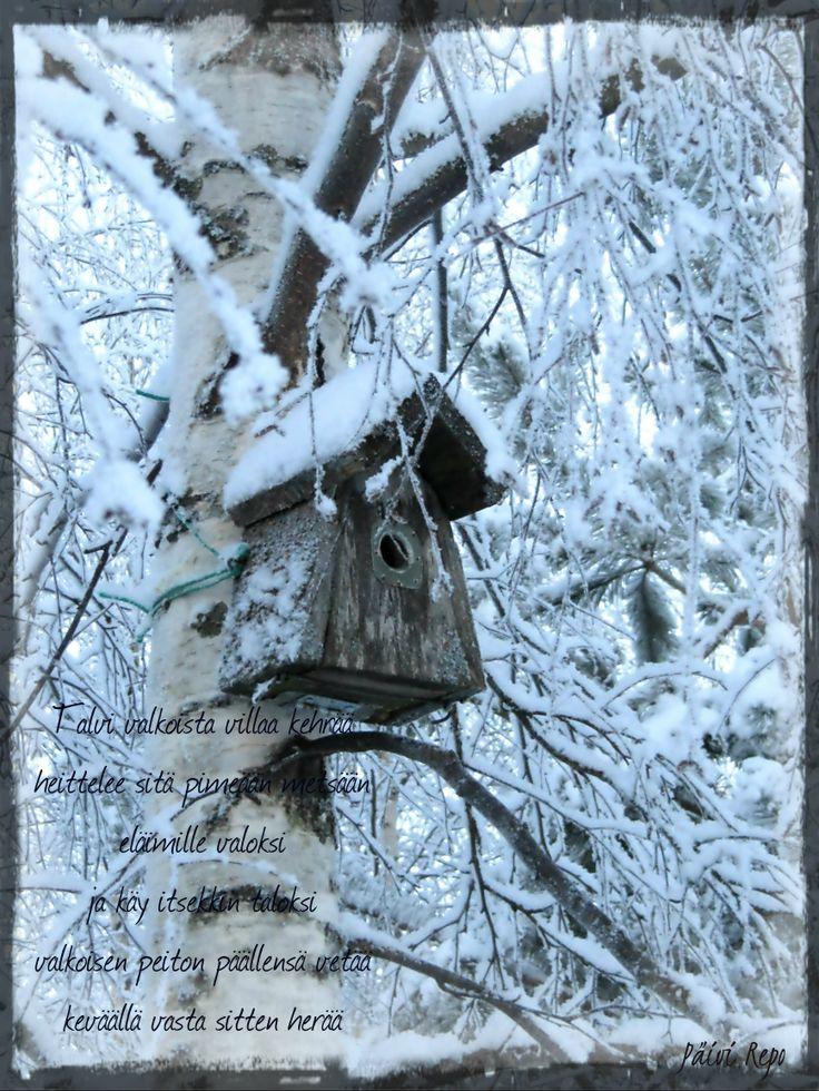 Finnish winter scene - An old birdhouse - Kuopio / Hiltulanlahti