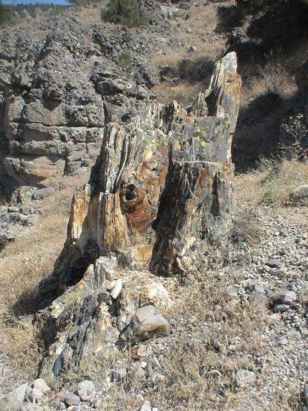 Hoçaş fosil ormanı/Seben/Bolu/// Türkiye'nin en eski fosil ormanıdır. Oluşumu günümüzden 15-16 milyon yıl önceye dayanıyor. Palmiye, sığla ağacı gibi türlerin fosilleri bulunmaktadır.