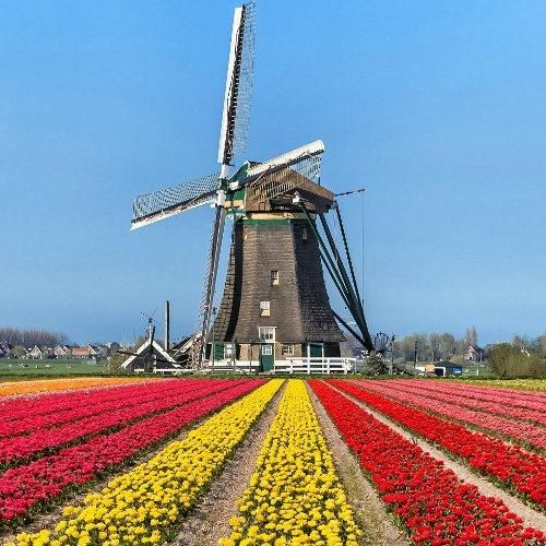Amsterdam e keukenhof  ad Euro 89.00 in #Travelbird #Travelbird
