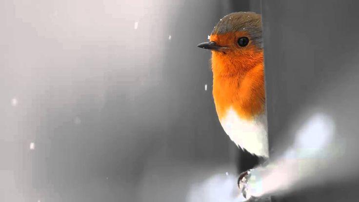 La magia intangibile della musica e la Bellezza Maddalena Negri Following a bird - Ezio Bosso Sanremo Verison [HD]